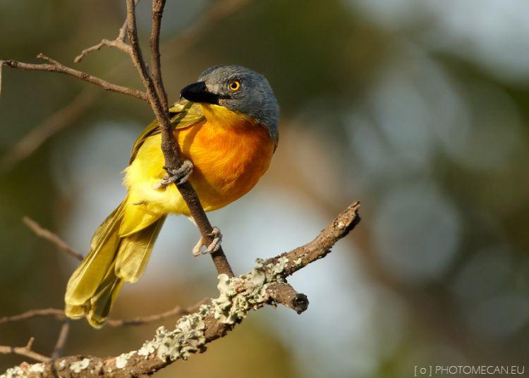 un oiseau à trouver Martin 20 mars trouvé par Martine - Page 2 145122