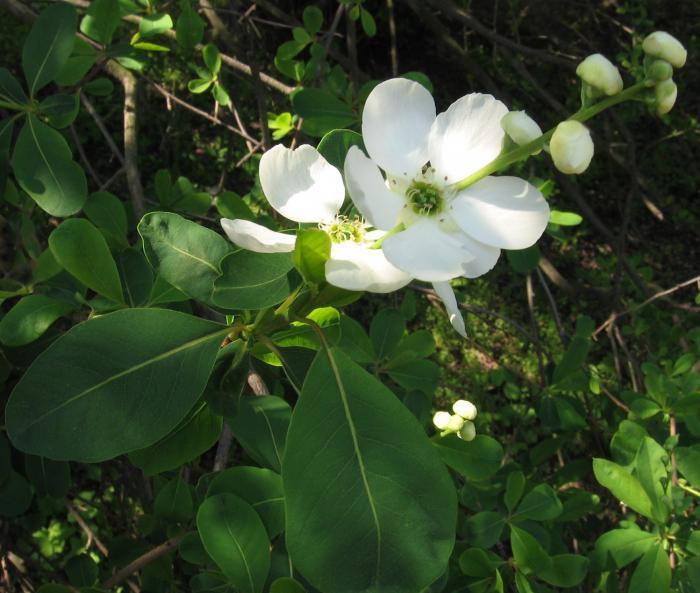 la fleur de Martin du 11 janvier trouvée par Jovany 15923