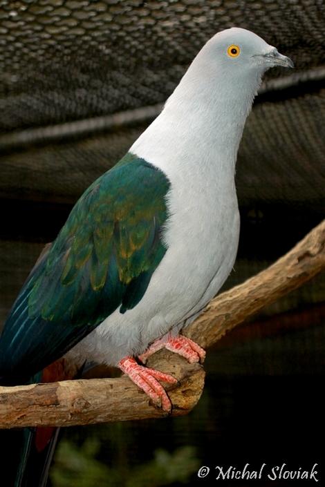 oiseau Martin 6 avril trouvé par Martine 191795