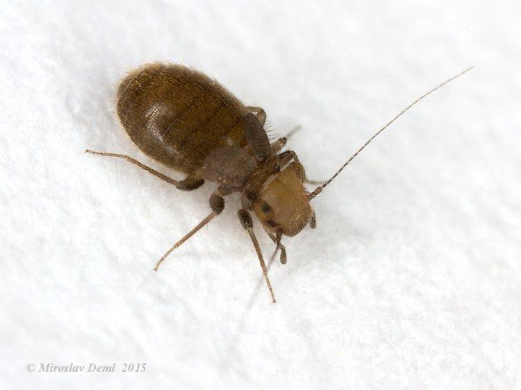 Insecte dans maison ventana blog for Assainir maison humide