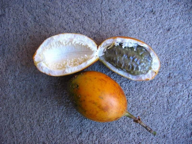 Passiflora maliformis image