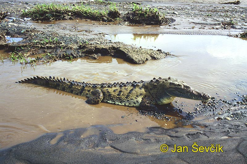 Crocodiles: Facts & Pictures
