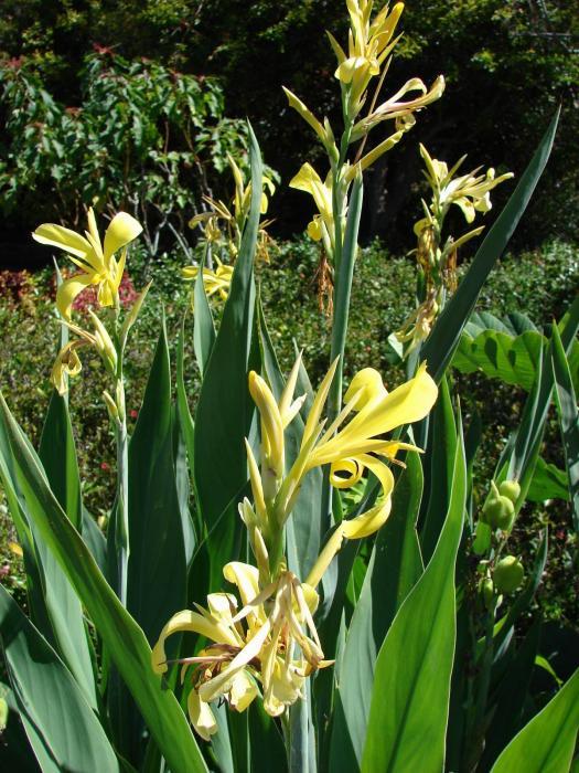 Neotropical Plant Portal Flash Cards