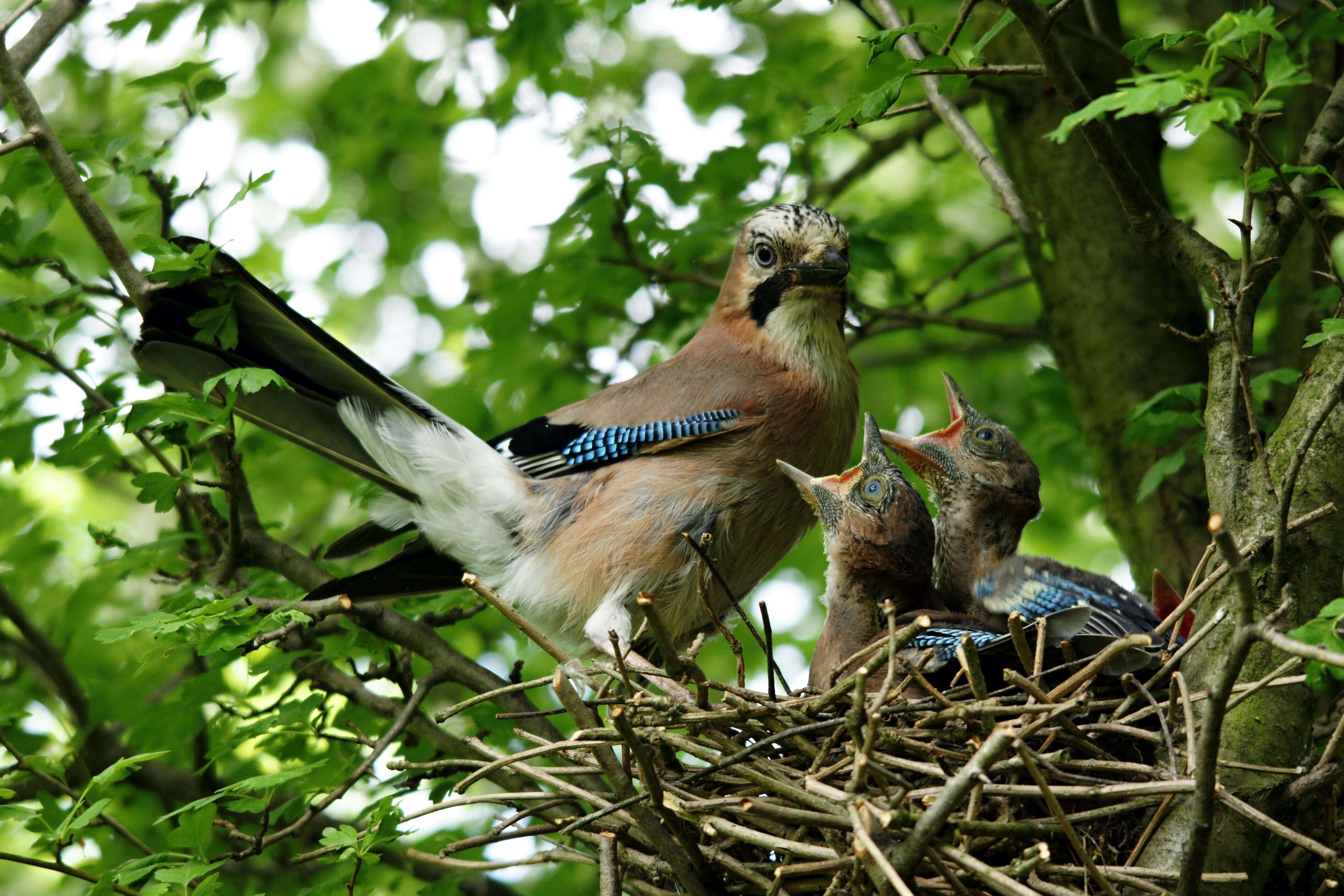 дерево на котором живут птицы картинки