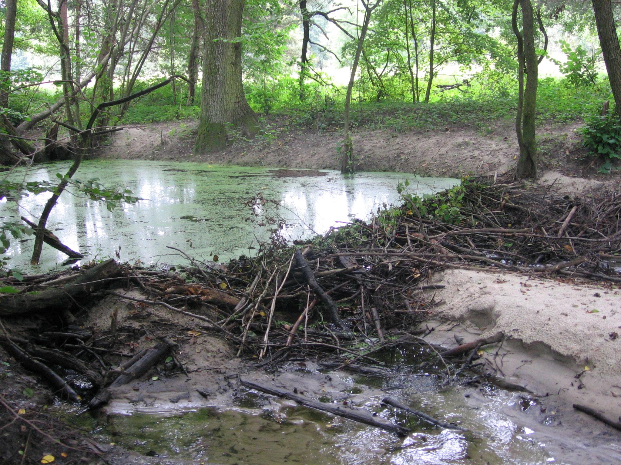 Дамба и плотина для пруда Разведение карпов 34