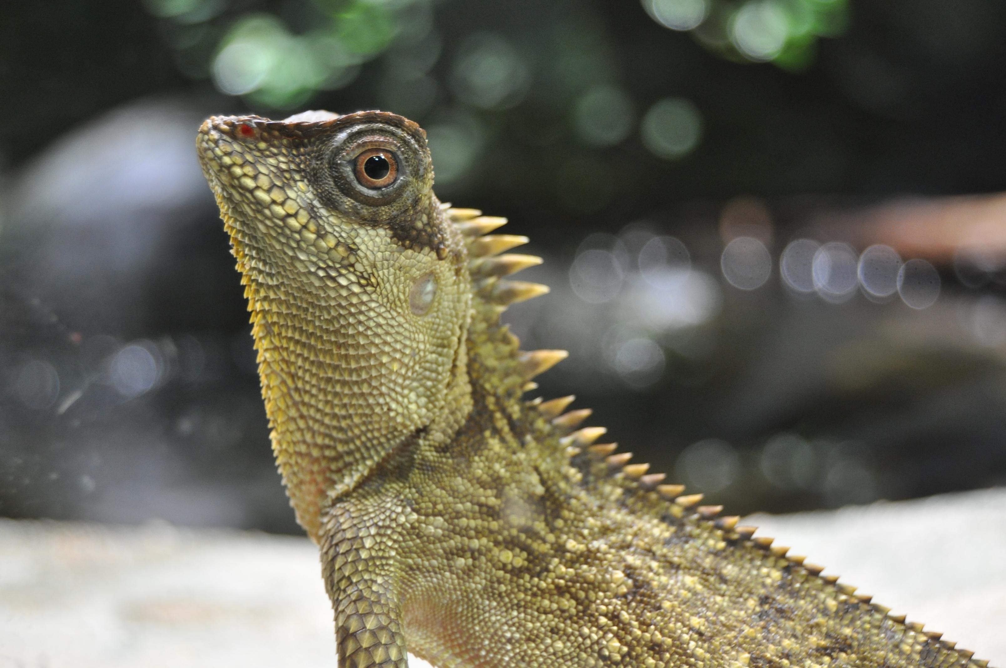 Зелёный акантозавр фото 8
