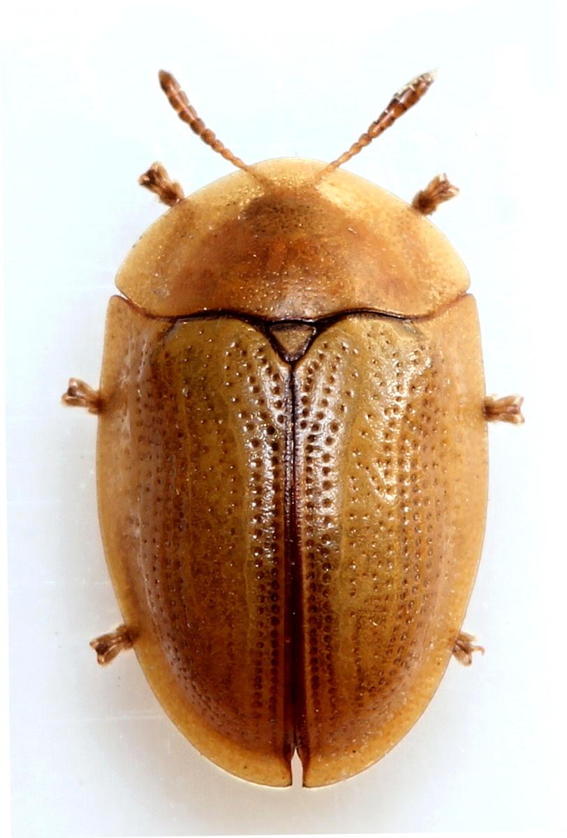 симпатичные клумбы жук семечка фото жилья смоленске недорого