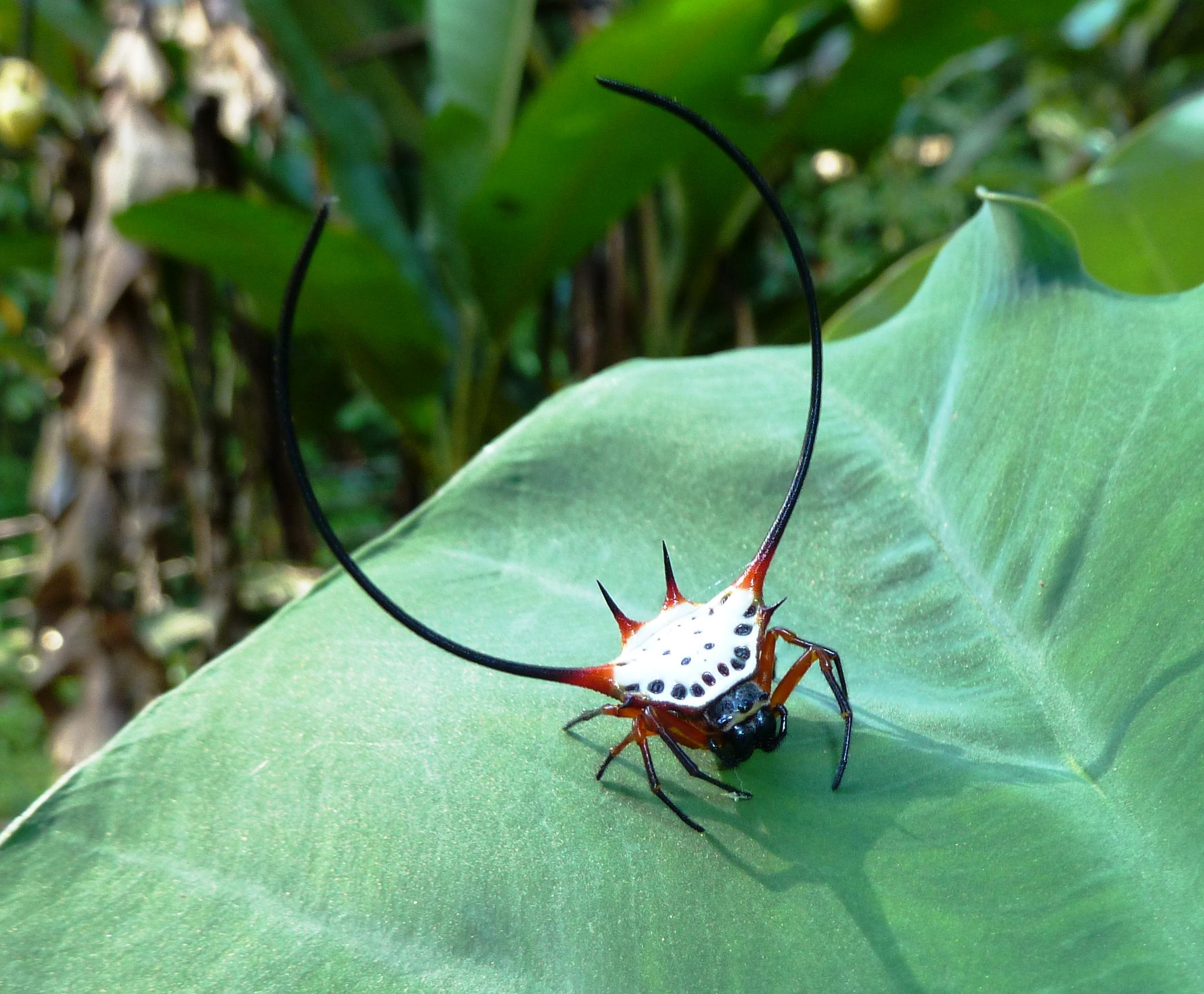рогатый паук картинки самых крутых