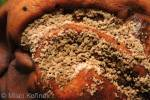 Botrytis cinerea - Grey Mould