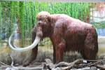 Mammuthus primigenius - Woolly Mammoth